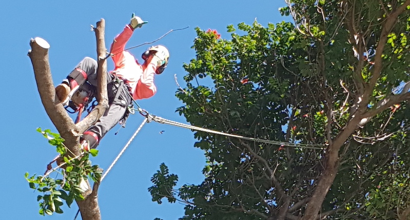 Tree Management Cairns
