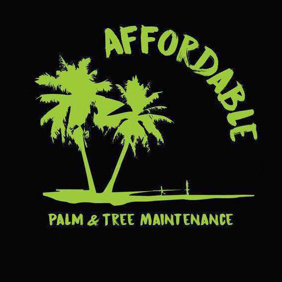 Affordable Palm and Tree Management