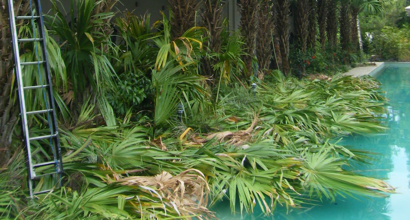 Green Waste Removal Cairns